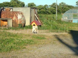 和(やわらぎ)の湯むかいの犬